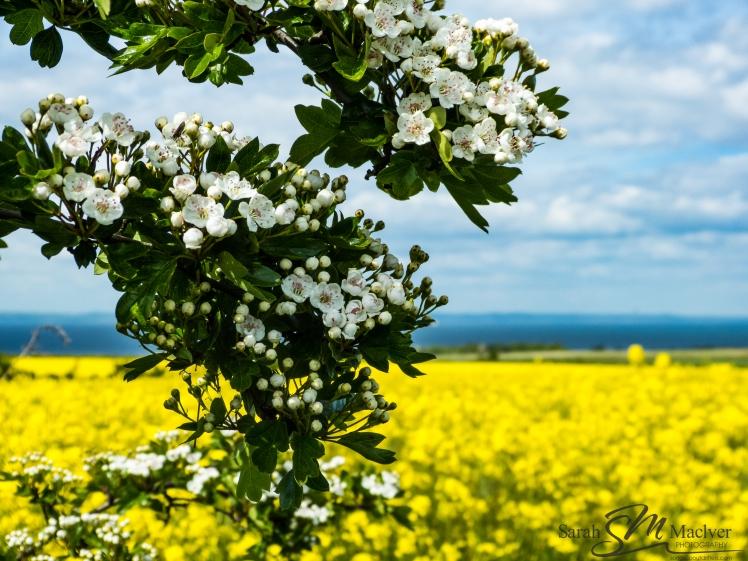 Flowers Hills Tranent Edinburgh Scotland Landscape